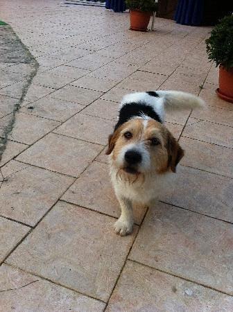 Hotel La Meridienne: This was his dog!!