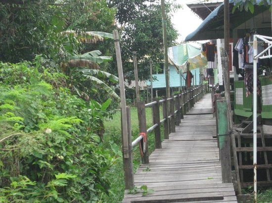 Borneo Seahare Guesthouse : bike tour