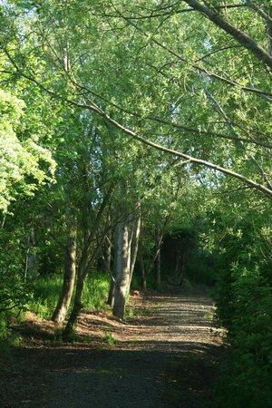 Ballyness Caravan Park: Woodland beside ponds