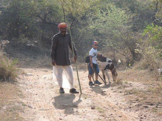 The Jhadol Safari Resort: Trekking.....