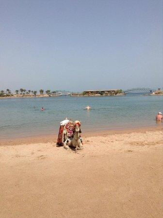 Desert Rose Resort: Пляяж