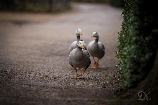 Beale Park: Duck Trails