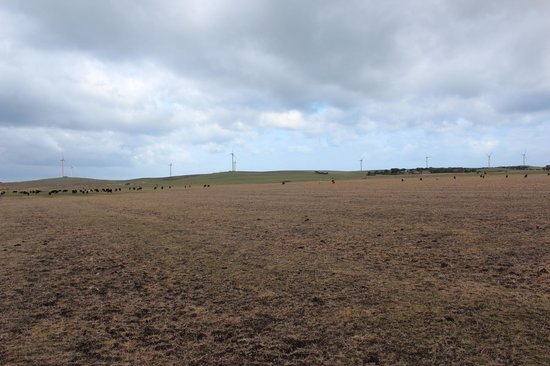 Codrington Wind Farm