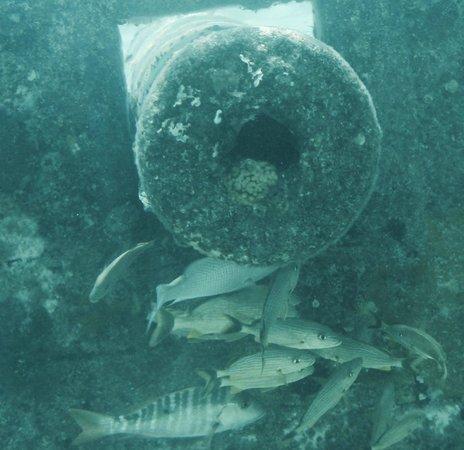 Coco Cay: Fish flock around a sunken cannon