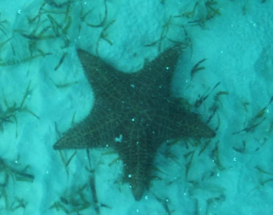 Coco Cay: Starfish through the bottom of tour boat