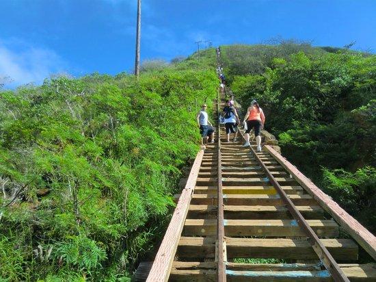 Koko Crater Trail : ココヘッド