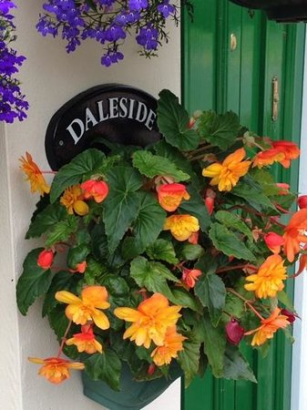 Daleside Arms: Spring Flowers