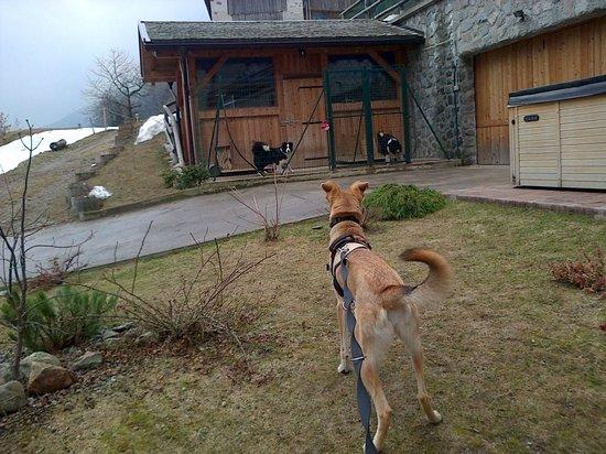 Chalet Val di Rabbi: giradino davanti allo chalet dedicato ai cani