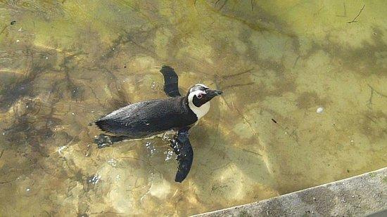 ARTIS Amsterdam Royal Zoo : Penguins