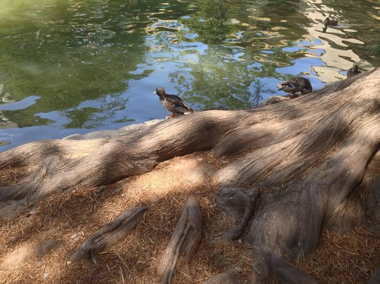River Walk: Набережная Сан Антонио