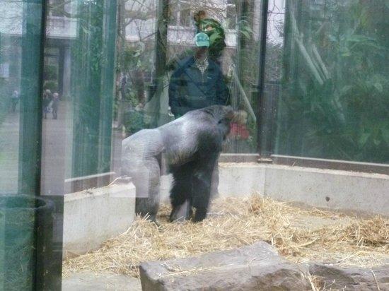 ARTIS Amsterdam Royal Zoo : Zoo