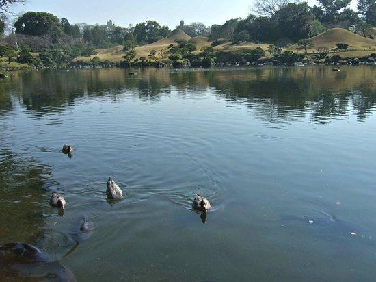 Suizenji Jojuen Garden : 池を泳ぐ鴨と庭園