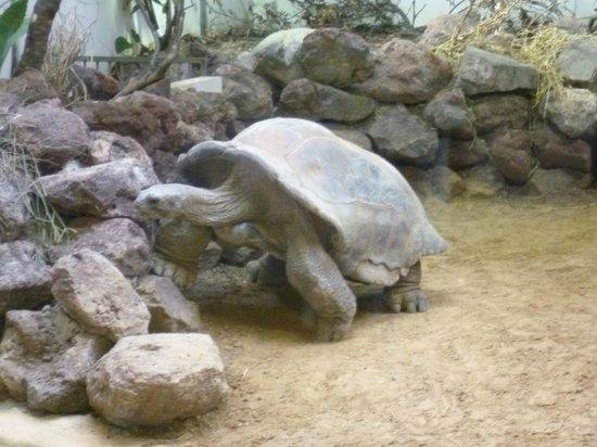 ARTIS Amsterdam Royal Zoo : Big!