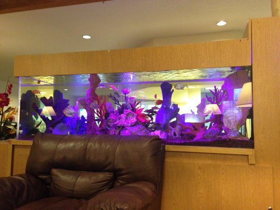 Cove of Lake Geneva: Beautiful aquarium in the main lobby