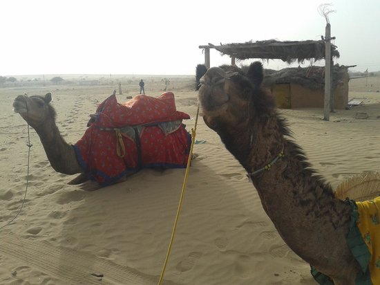 Hotel Shahi Palace : The Safari