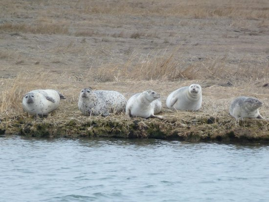 Freeport Water Taxi & Tours: Photo by Capt. Rick Cohen on a Seal Watching Tour
