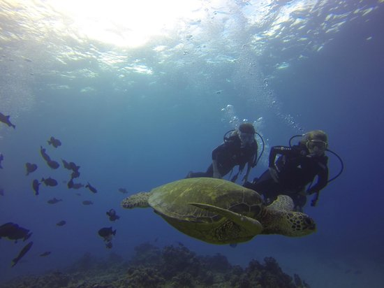 Oahu Diving: Sea turtle time