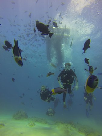 Oahu Diving: Diving with Fish