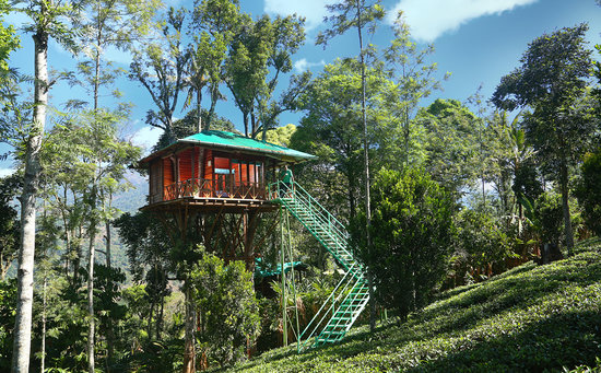 Tree House Interior - Picture of Dream Catcher Plantation ...
