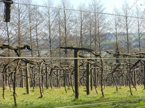 Chiltern Valley Bed & Breakfast: Vines