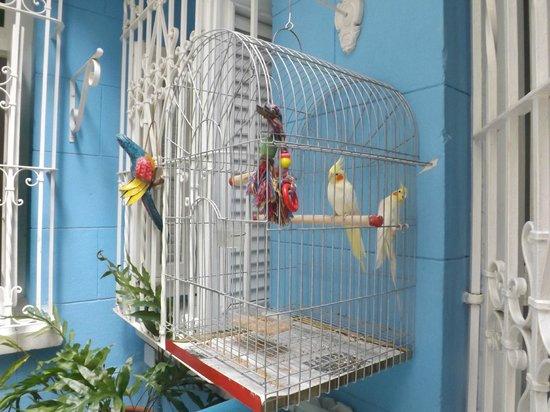 Casa Onelia: Birds