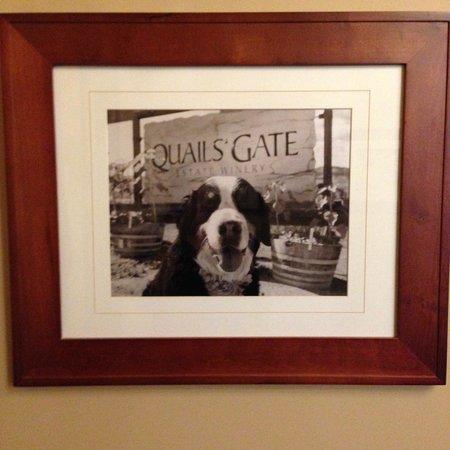 Old Vines Restaurant : Beware the Quail's Gate Guard Dog