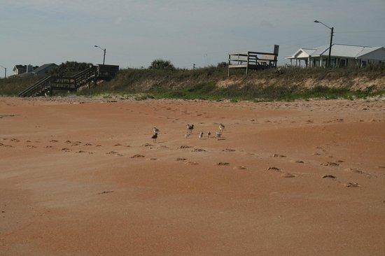 Whale Watch Motel: Cinnamon sand of the beach.