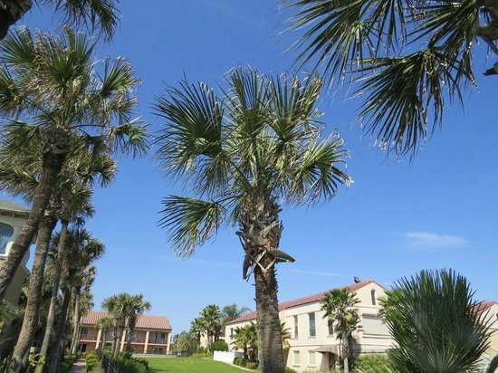 La Fiesta Ocean Inn & Suites : View of the grounds on the way to the beach