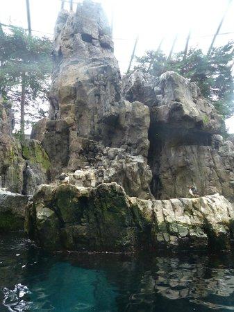 Lisbon Oceanarium : Shore birds enclosure
