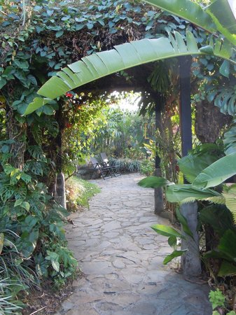Pura Vida Hotel : Walkway to the gardens