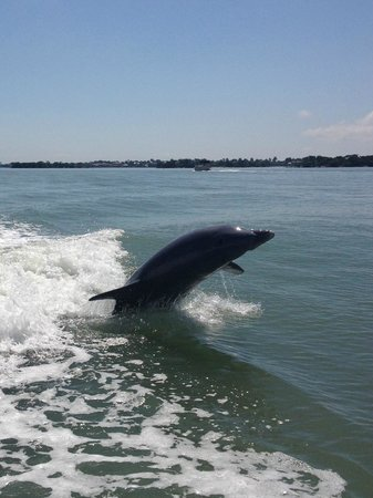 Sea Shell Boat Tours: dolphins 2