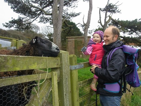 Widmouth Farm Cottages: greeting the animals