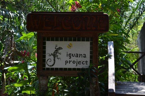 Green Iguana Conservation Project: Entrance