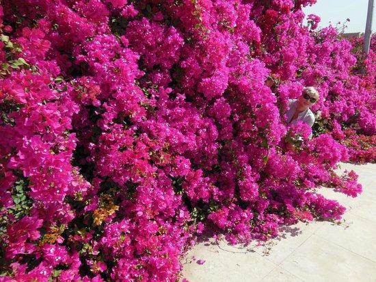 Pyramisa Sahl Hasheesh Resort: супер