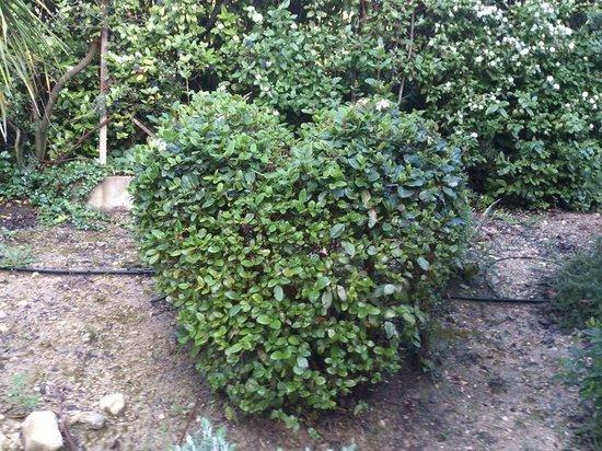 Domaine Jobert : deco du petit jardin privé