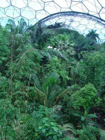 Eden Project: massive