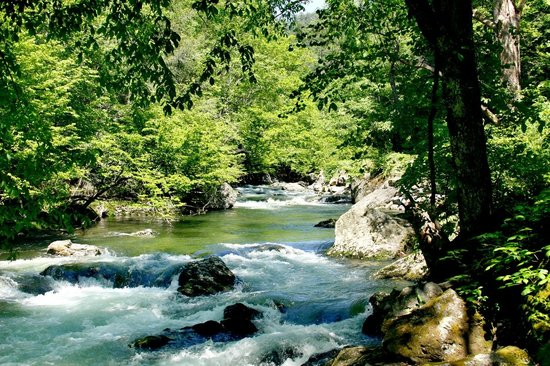 Chilhowee Mountain Retreat : Check out the rivers and streams