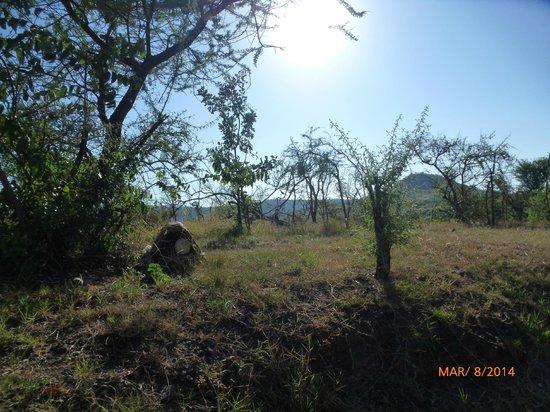 Serengeti Serena Safari Lodge: La vue depuis notre balcon
