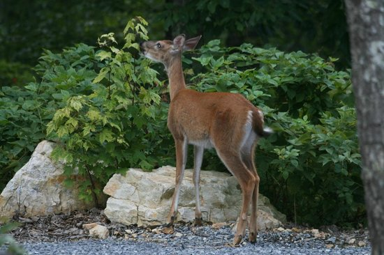 Chilhowee Mountain Retreat: Having a snack