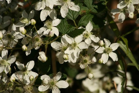 Chilhowee Mountain Retreat: Dogwoods in bloom