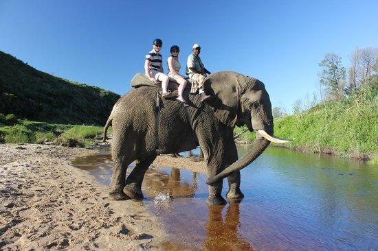 Botlierskop Private Game Reserve: Elephant walk!