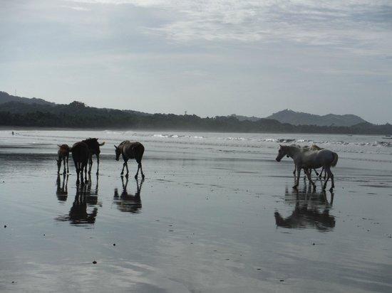 Samara Tree House Inn: Taking an early morning walk with the horses
