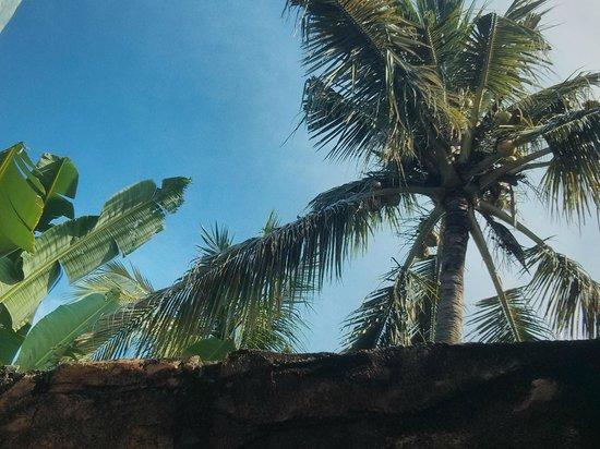 Rumahku Homestay: Blick durchs offene Dach der Dusche