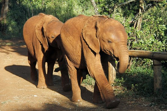 David Sheldrick Wildlife Trust: Evening viewing