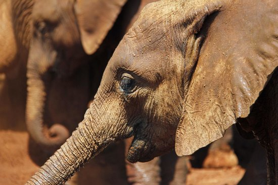 David Sheldrick Wildlife Trust: Morning viewing