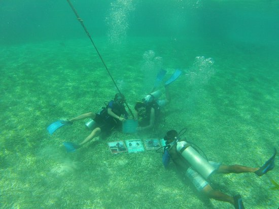 El Secreto : Diving Hol-Chan
