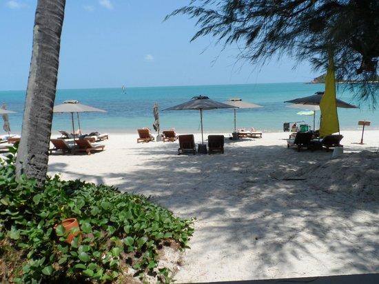 SALA Samui Resort And Spa: beach