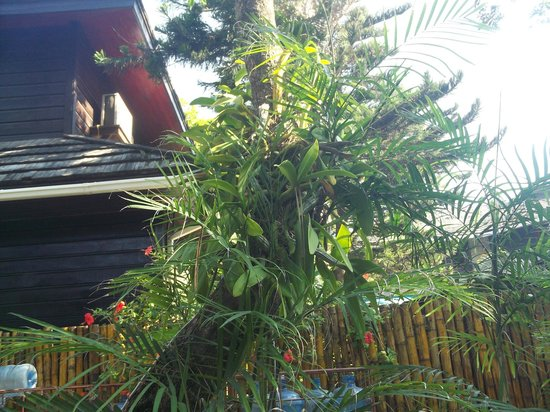 Bananarama Beach and Dive Resort: plantings surround each building on the resort property