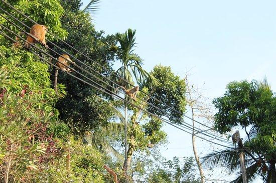 Mahaweli Reach Hotel : local neighbours