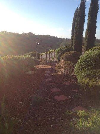 Seven Quails Vineyards Bed & Breakfast: Front garden area overlooking the vineyards